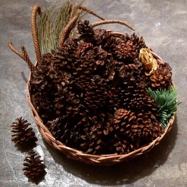 harga 1kg pine cones | buah cemara | bahan kerajinan Tokopedia.com