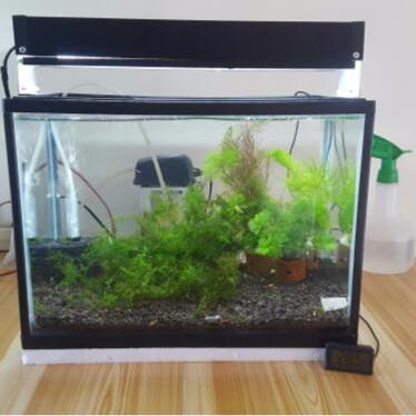 Jual Paket Aquascape Mini Kota Tangerang Goquarium Tokopedia