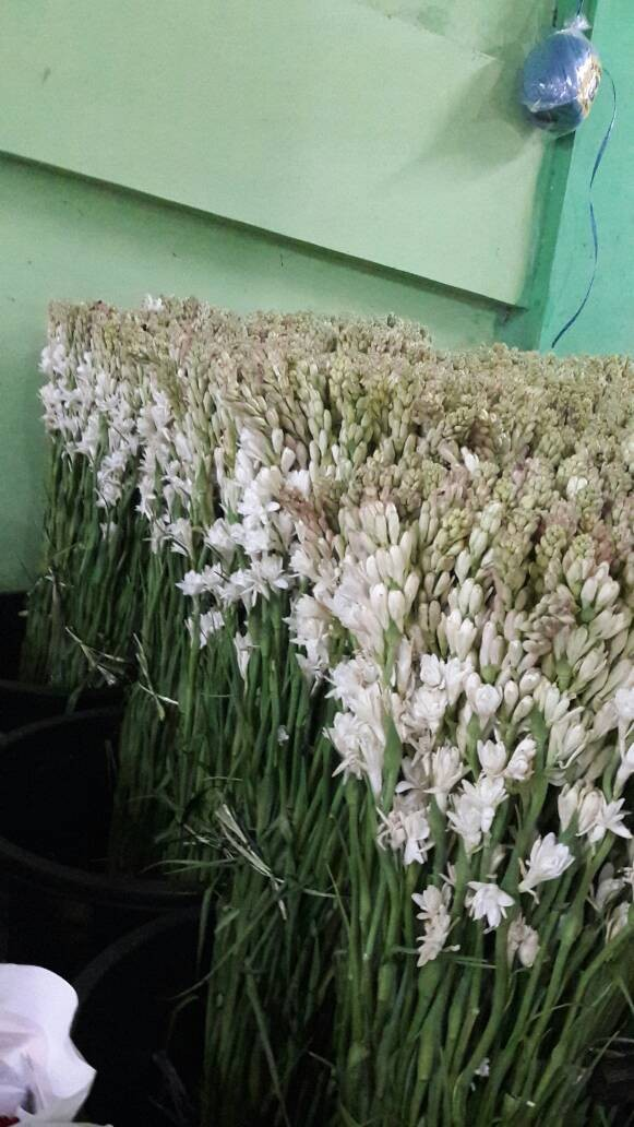 Foto Produk bunga sedap malam dari anjani anisa florist