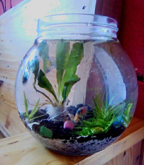 Jual Aquascape Aquarium Bulat Mini Kota Pasuruan Betha Safir Tokopedia