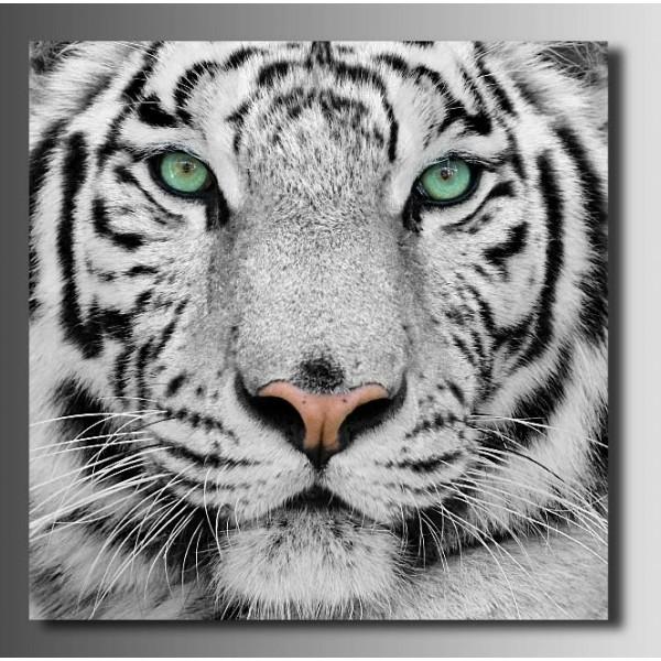 harga Repro digital lukisan macan tiger putih shio feng shui simple  custom Tokopedia.com
