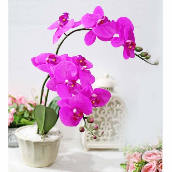 Image result for bunga hias anggrek