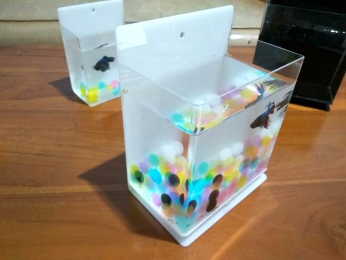 harga Aquarium mini akuarium ikan cupang dinding gantung meja acrylic Tokopedia.com