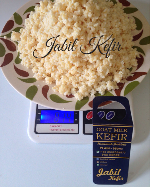 Kefir Grains Bibit Super 50 Gram Biji