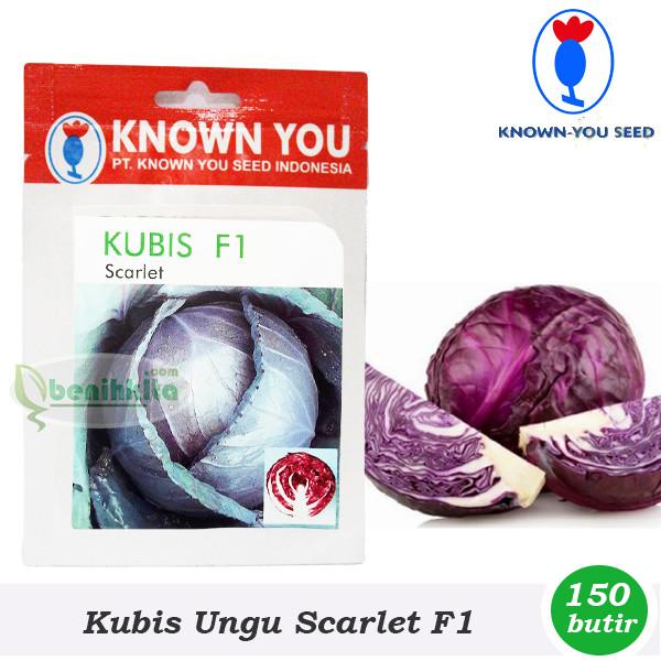 Benih/bibit kubis ungu scarlet f1 (known…