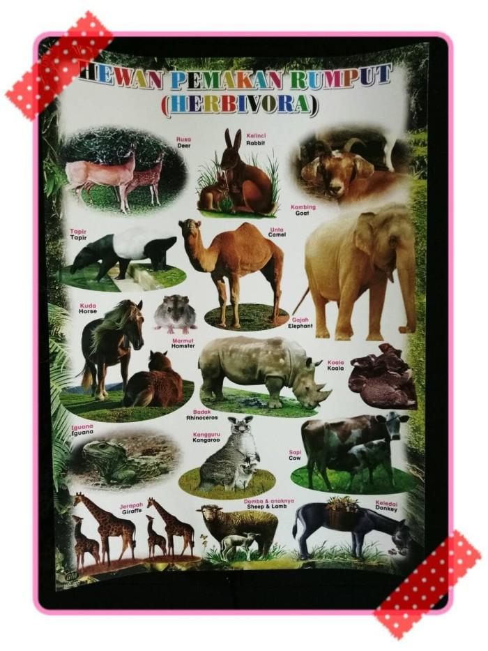 54 Koleksi Gambar Binatang Pemakan Tumbuhan Gratis Terbaru