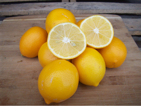 harga Lemon meyer purwokerto Tokopedia.com