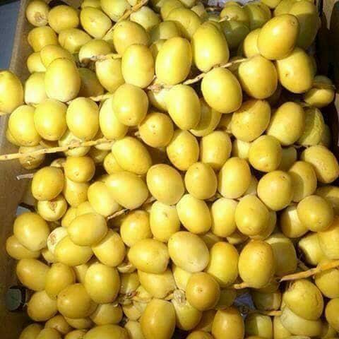 harga Po kurma muda / ruthob kuning Tokopedia.com