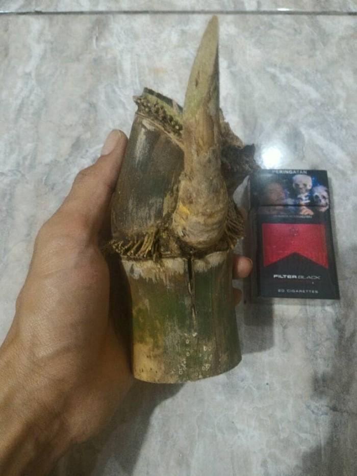 harga Bambu Sabdo /Lutut Bertuah alami. unik & antik, bukan petuk/patil lele Tokopedia.com