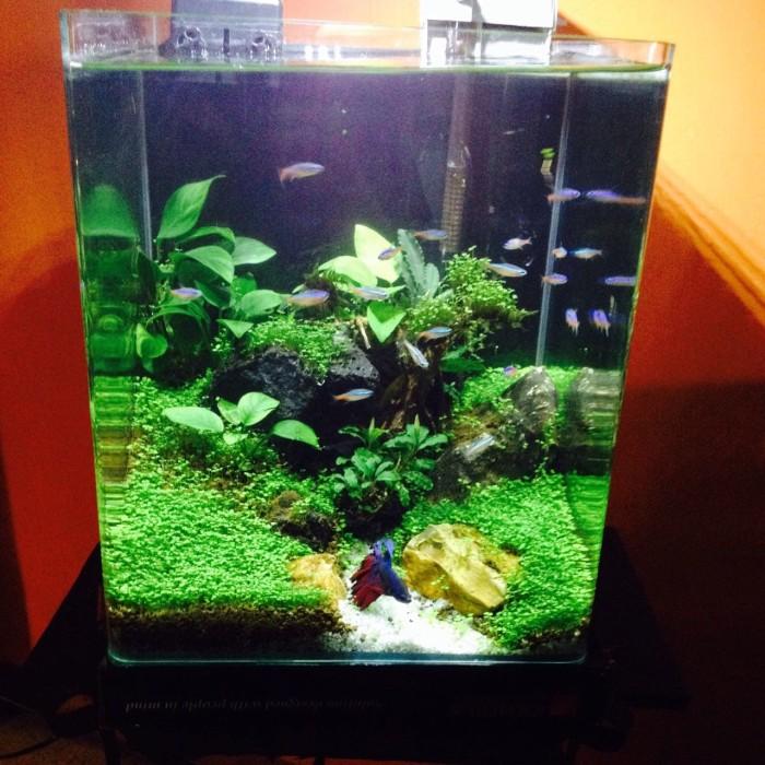 Jual SEED CARPET MINI DWARF 3 MILI Benih tanaman air instan ) aquascape -  Kota Tangerang - BLOOM AQUATIC   Tokopedia