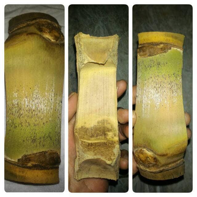 harga Bambu Petuk Temu Ruas Asli-pethuk unik, antik, ruas berhadapan Tokopedia.com