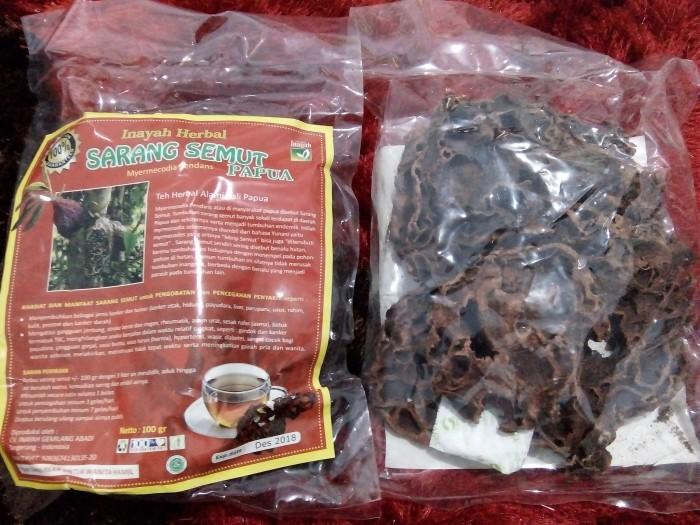Sarang Semut Rebus (Asli Papua)