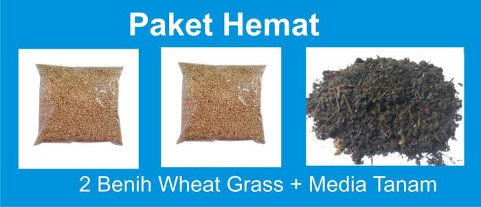 harga Paket happy dan hemat menanam rumput gandum wheat grass Tokopedia.com