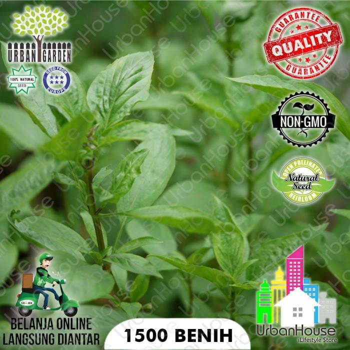 ... harga Herbs - benih tanaman kemangi basil thai eropa 1000 biji grosir pack Tokopedia.com