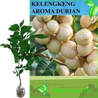harga Kelengkeng aroma durian Tokopedia.com