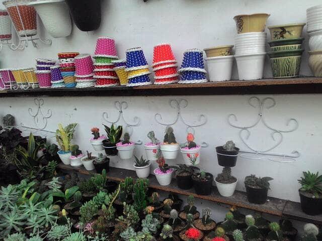 Jual Kaktus Mini Solo Kota Surakarta Toelfit Tokopedia