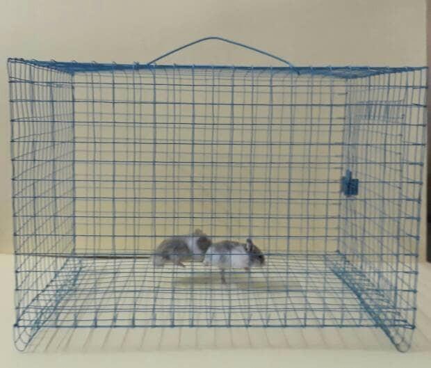 harga Kandang kawat hamster/kucing/kelinci/landak Tokopedia.com
