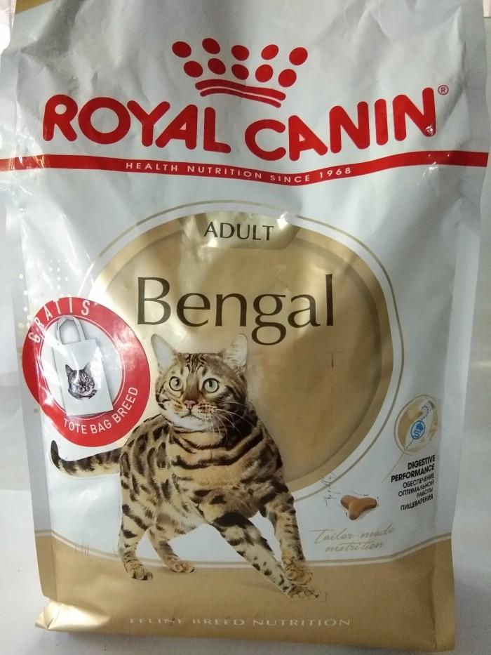 Info Kucing Bengal Travelbon.com