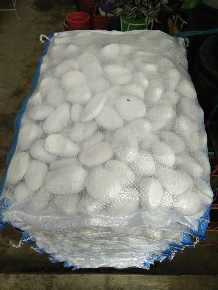 harga Baru koral putih besar/batu taman Tokopedia.com