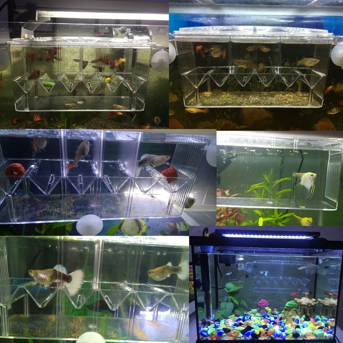 Baby Aquarium Fish Shrimp Tank Net Breeder Hatchery Newborn Case Box DD