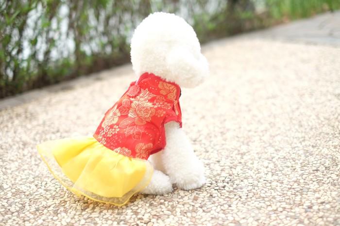harga Baju imlek anjing betina type b / baju imlek kucing / baju sinchia Tokopedia.com