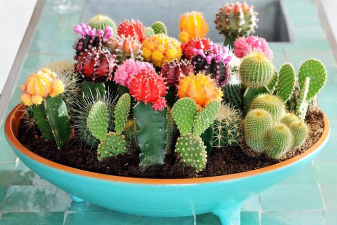 Jual Benih Bibit Biji Tanaman Hias Kaktus Cactus Seeds Flowers Of The Desert Import Kab Sleman Onigiri Frenzy Tokopedia