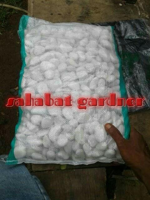 harga Batu koral putih Tokopedia.com