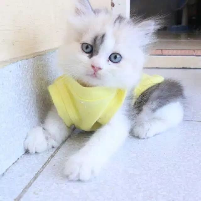Kaos Kuning Lucu Banget Untuk Kucing Dan Anjing Size S M L Xl