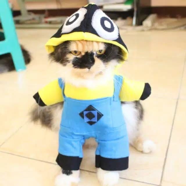 Kostum Minion Lucu Banget Untuk Kucing Anjing Baju Kucing New