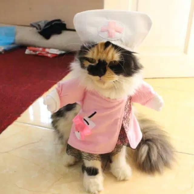 Jual Kostum Suster Imut Banget Untuk Kucing Anjing Baju Kucing Lucu Jakarta Selatan Si Meong Tokopedia