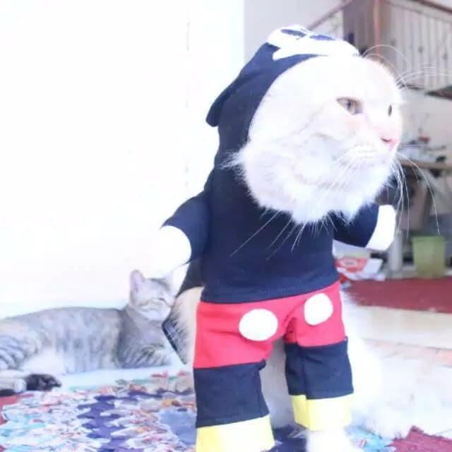 Jual Kostum Mickey Mouse Untuk Kucing Dan Anjing Baju Kucing Lucu Jakarta Selatan Si Meong Tokopedia