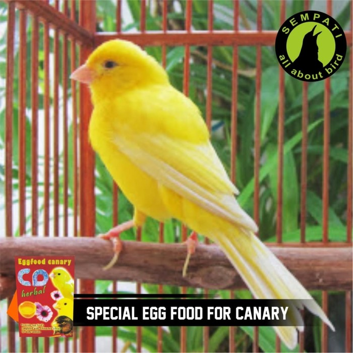 ... PAKAN BURUNG KENARI LOVEBIRD CD HERBAL EGGFOOD
