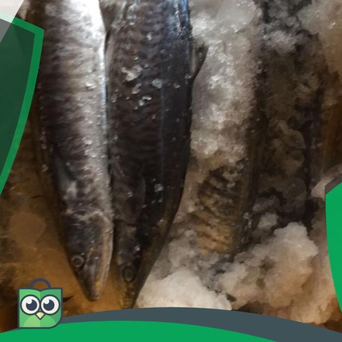 Download 54 Koleksi Gambar Ikan Tenggiri Gepeng Terbaru