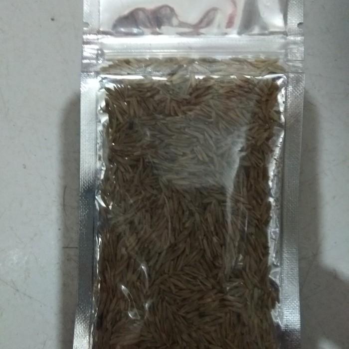 aquarium aquascape hair grass hg medium seed bibit