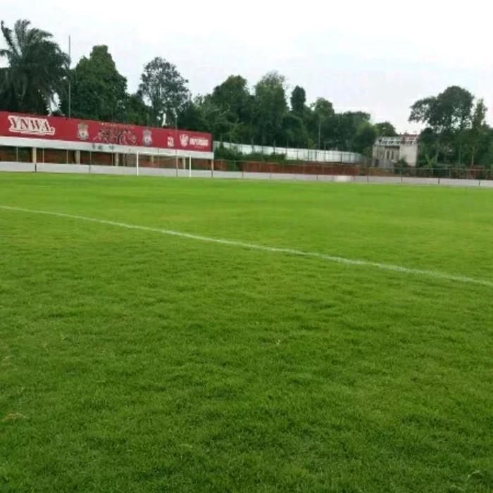 Benih biji rumput bermuda grass seed-lapangan sepakbola