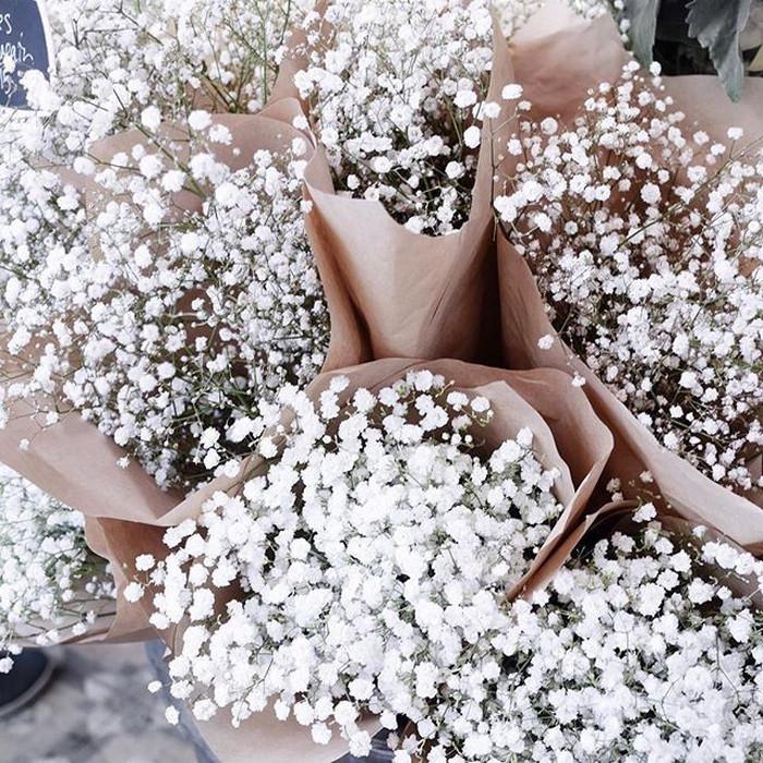 jual bunga baby breath gysophila bunga potong segar kab