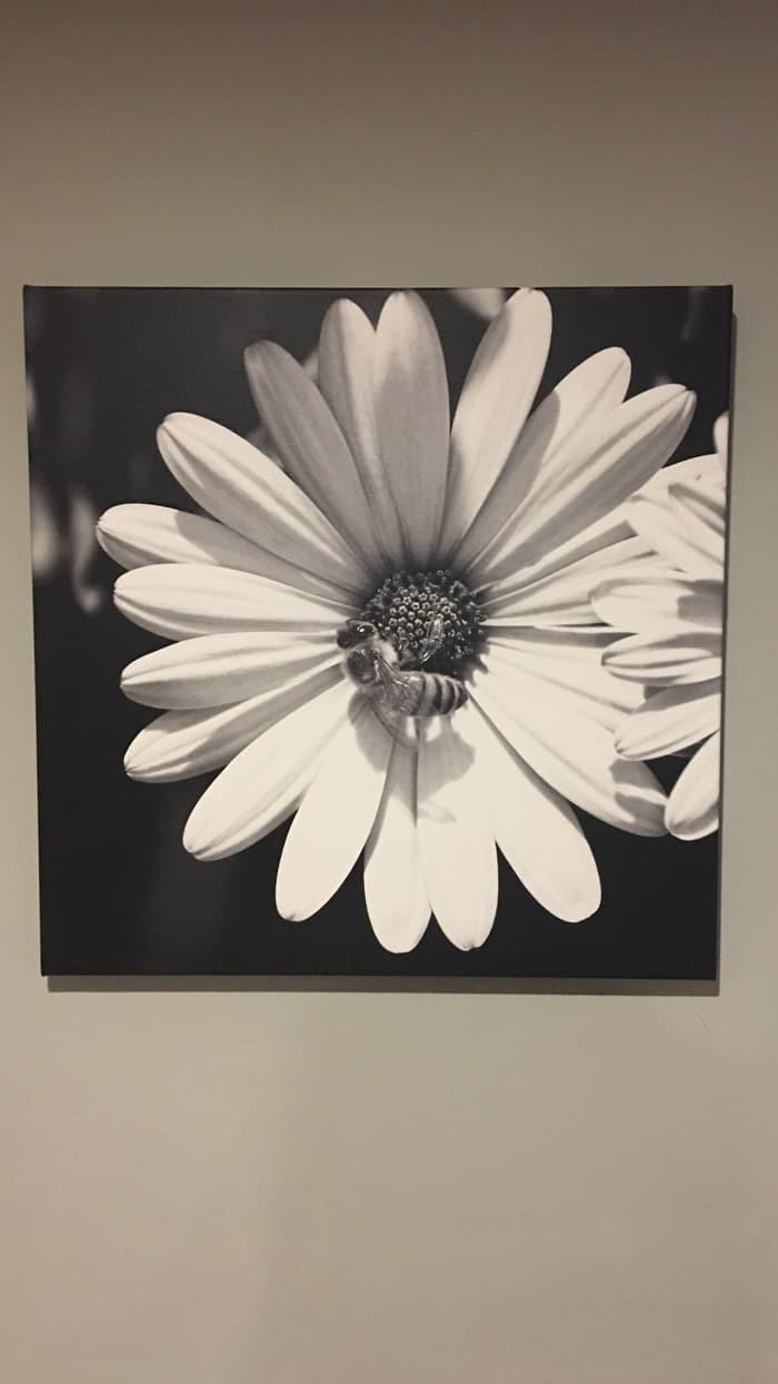 Jual Limited Lukisan Bunga Dan Tawon Hitam Putih 45 Cm X 45 Cm Kota Denpasar Tinkerbellshop