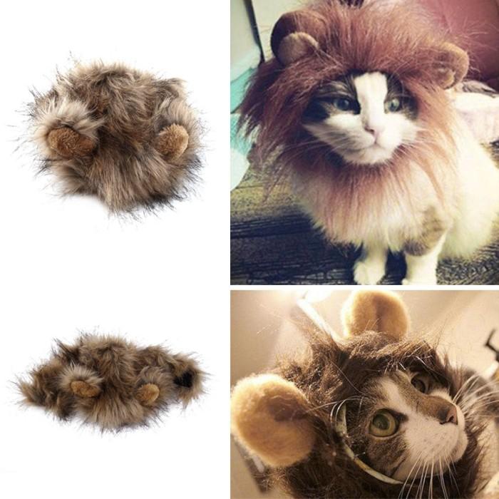 560 Koleksi Gambar Binatang Kepala Kucing HD