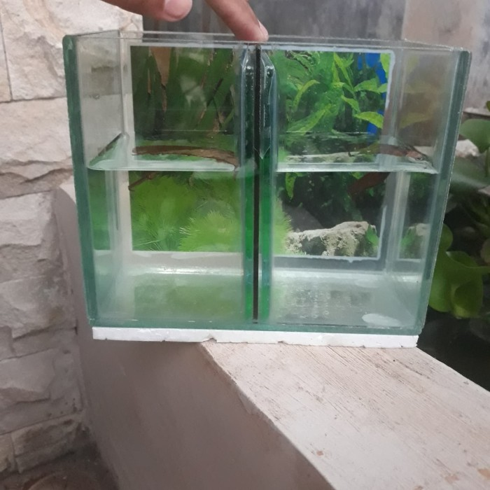 Jual Aquarium Cupang Double Kab Bogor Digigit Cupang Tokopedia