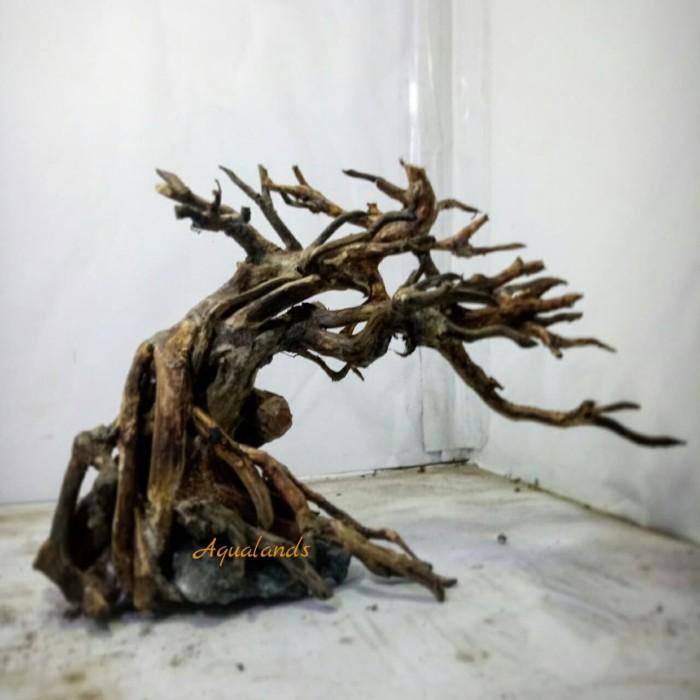 Jual Bonsai Aquascape Untuk aquascape akar kayu rasamala ...