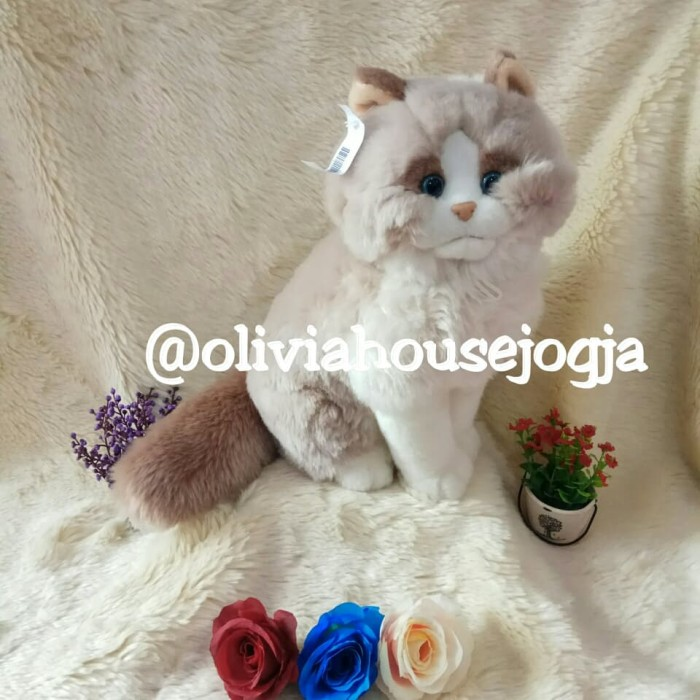 Info Kucing Persia Pesek Hargano.com
