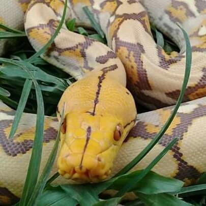 81 Gambar Hewan Peliharaan Reptil Gratis Terbaik