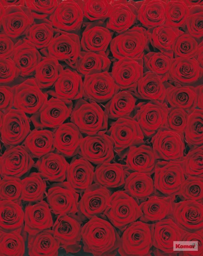 400 Wallpaper Bunga Rose