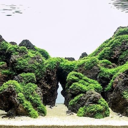 Contoh Aquascape Batu