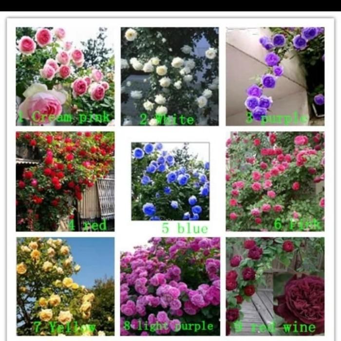 Fantastis 10+ Kumpulan Bunga Mawar Warna Warni