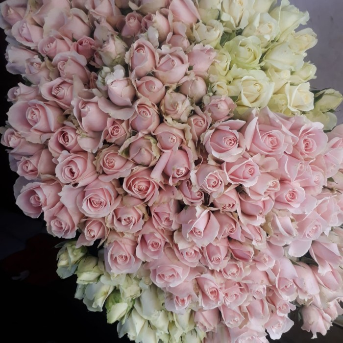 100+ Gambar Bunga Mawar Warna Putih Paling Bagus