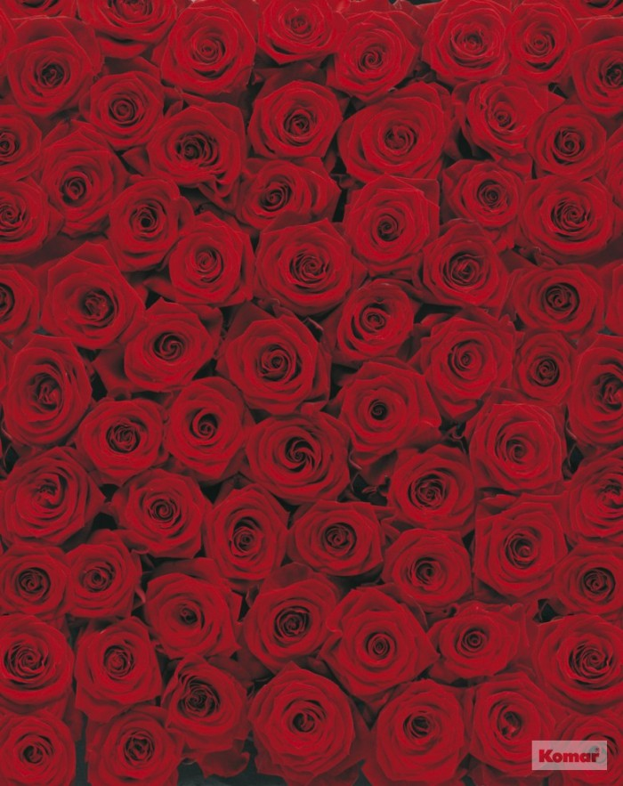 Jual Import Jerman Merk Komar Wallpaper Dinding Bunga Rose Merah 4077 Jakarta Barat Voltage Shop Tokopedia