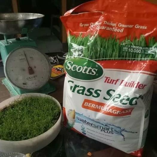 Benih rumput - biji rumput Bermuda grass - swiss - Jepang - golf 1 kg
