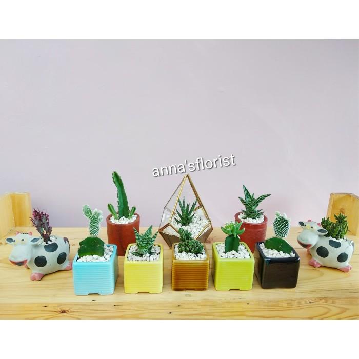 Update Harga Isi 5 Pot Keramik Dan Tanaman   Kaktus   Sukulen Di Kab ... ad39bd42c1