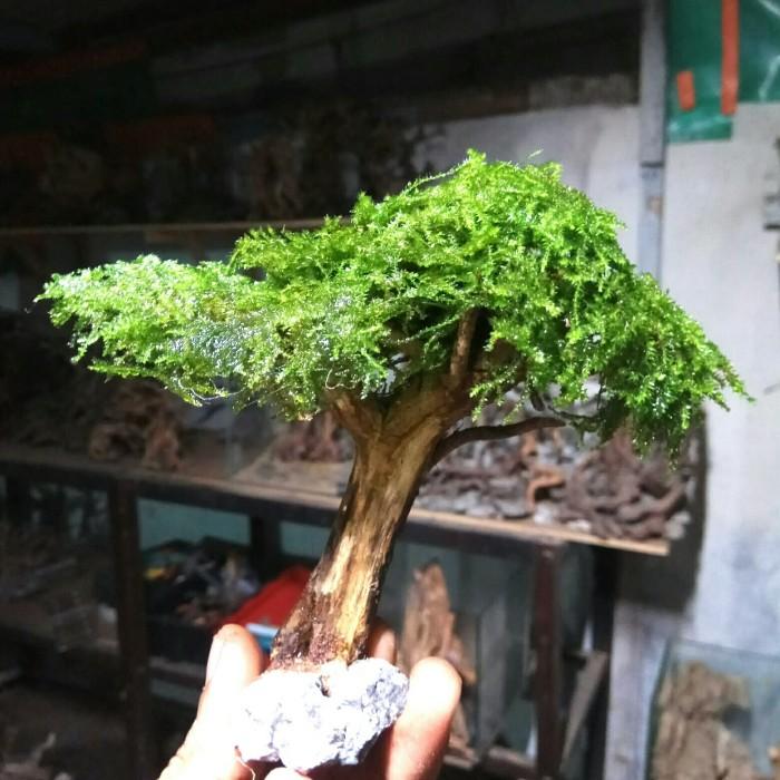 Jual Bonsai Mini Aquascape 01 Kota Depok Mjb Aquatic Plants Tokopedia